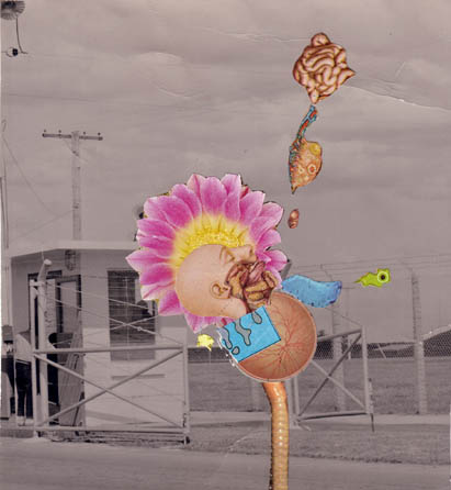 Sunflowerlogic